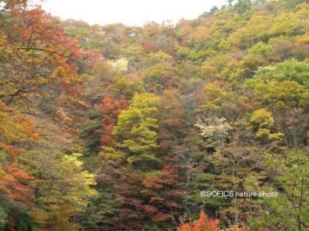 色彩は自然から学ぶべし�@.jpg